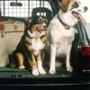 Ob unterwegs oder daheim: Tipps für den Urlaub mit Hund