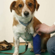 Viele verschiedene Wege führen im Notfall zum Tierarzt