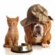 Haustiere wiederfinden mit Hilfe von GPS