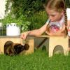 Kaninchen und Meerschweinchen: Stallputzen wird zum Event für Kinder