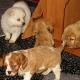 Ein Welpe zieht ein: Welche Hundeversicherung ist sinnvoll?