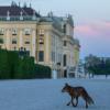 Wo sich Fuchs und Mensch Gute Nacht sagen