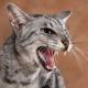 Wenn die Katze kratzbürstig wird