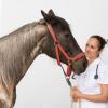 Die häufigsten Erkrankungen des Pferdes: Pferde-Symposium an der Vetmeduni Vienna