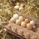 Eier: Der Teufel steckt im Detail