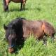 Magenprobleme beim Pferd - das oft unerkannte Leid