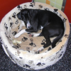 Wissenswertes über Arthrose bei Hunden