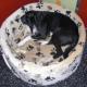 So finden Sie den richtigen Schlafplatz für Ihren Hund