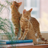 Katzen allein zu Haus? Kein Problem!