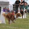 Bewegung und Sport mit Hunden