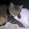 Leidet Ihre Katze unter Schmerzen? Diese fünf Warnsignale weisen darauf hin