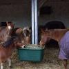 Ein Heuautomat für Pferde