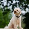Hunde scheren: Tipps für die richtige Hundeschur