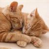 Freigänger im Winter: Katzen brauchen warme Schutzhütte als Rückzugsort