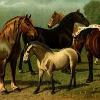 Auch bei Pferden können Allergien nachgewiesen werden
