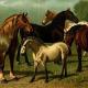 Atemwegsbeschwerden bei Pferden