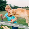 Trickdogging: Pfötchen geben verbessert Grundgehorsam