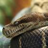 Schlangen im Haus: Mietrecht bei Exoten