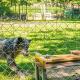 Wölfe führen, Hunde folgen – und beide kooperieren mit dem Menschen