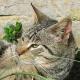 Katzenohren: Flauschiges Wunderwerk mit Pflegebedarf