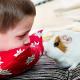 Finden, füttern, freuen: Naturapotheke für Meerschweinchen