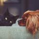 Diamantbestattung für Haustiere: Wie der Markt für Haustierbestattungen sich im Jahr 2019 verändert hat