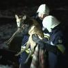 Feuerwehrmänner retten junges Reh in waghalsiger Aktion von Eisscholle