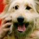 Zahnhygiene beim Hund: Kaustreifen, Kauknochen, Zähneputzen