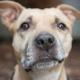 Bleib gesund - bleib zuhause: Beschäftigungstipps für Hundebesitzer