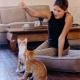 Mit der Katze im Homeoffice: Digitales Spielvergnügen