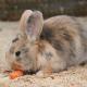 (Oster)Hasen-Geburt in der Tierwelt Herberstein