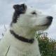 Hundehalsbänder: Das ist bei der Suche wichtig