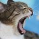 Tipps zur richtigen Mundpflege bei Hunden und Katzen