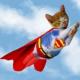 Supercat fliegt wieder