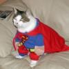 Ein Fall für Supercat