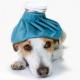 Die Besten Tipps gegen Hundefieber