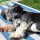 Ferienzeit: Reisen mit Haustieren