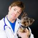 Juckreiz: Cortisonverabreichung trotz Cushing Syndrom (9)