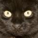 Spielzeug und Zubehör: Gefahren für die Katze
