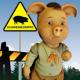 Hauskatze mit Schweinegrippe infiziert