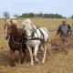 Neue Erkenntnisse zum Pferdegenom in Science veröffentlicht