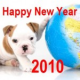 TierarztBLOG Jahresrückblick 2009