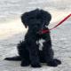First Dog Bo legte sich mit Santa Claus an