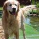 Sorgenfreies Spiel im Garten: Sicherheit an Teich und Pool