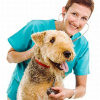 Tumor in der Hundepfote (5)