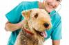 Nierenerkrankung bei Hund und Katze