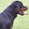 Das A und O der Hundehaltung: Erziehung