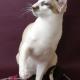"Internationale Katzenausstellung ""Spirit of Cats"""