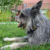 Arthrose: Eine der häufigsten Erkrankungen bei Hunden