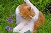 Arthrose bei Katzen – die heimliche Volkskrankheit